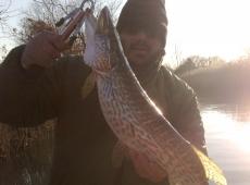 Luccio pescato nel fiume Terzo