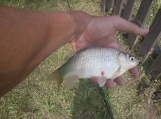 Il primo pesce... va premiato.
