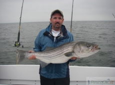 striped bass 11 kg neal