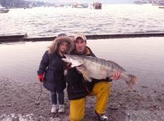 lucioperca lago Maggiore Jfish