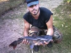 pesce gatto americano lago domitio (na)