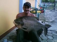 Cachama da 17 kg