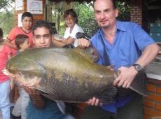 Cachama da 28 kg