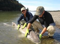 Storione 170 kg pescato in Canada