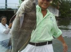 Pesce miraguaia pescato in Brasile