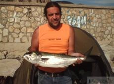 Pesce Serra Porto Terracina (LT)
