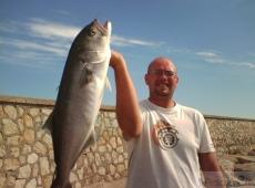Pesce serra Terracina (LT)