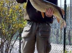 Luccio Kg 7,6 Lago Salto