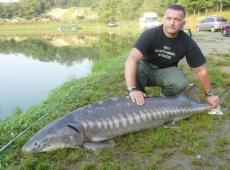 Uno Storione di 85kg