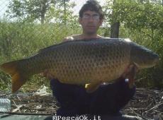 Carpa regina 20.50 kg Bolsena