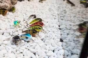 Pescare Show esche artificiali spinning