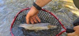 Apertura della pesca alla trota 2020: cosa fare in questo periodo di pausa?
