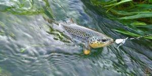 Corso pesca